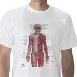 Anatomical T-Shirt Nervous System