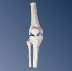 Mini Knee Joint without base