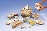 Giant Brain Model, 2.5 times full-size, 14 part