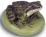 Common Frog Replica, male (Rana temporaria)