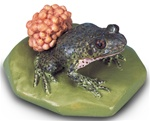 Midwife Toad Replica (Alytes obstetricans)