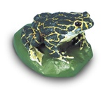 Green Toad Replica, male (Bufo viridis)