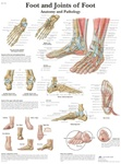 Foot and Ankle - Anatomical Chart
