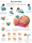 Breastfeeding - Anatomical Chart