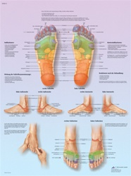 Foot Reflex Zone Massage - Anatomical Chart