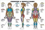 Exercise and Muscle Guide Anatomical Poster - Female
