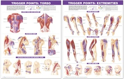 Trigger Point Anatomical Chart Set: Torso & Extremities, 2nd Edition