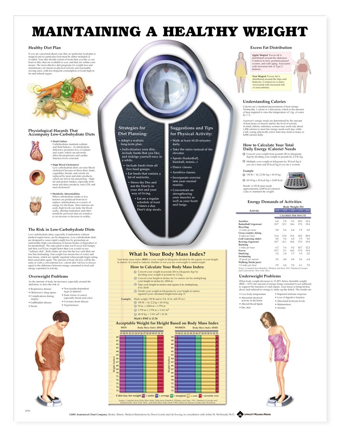 Maintaining An Ethical Capsule Wardrobe: Maintaining A Healthy Weight Anatomical Chart