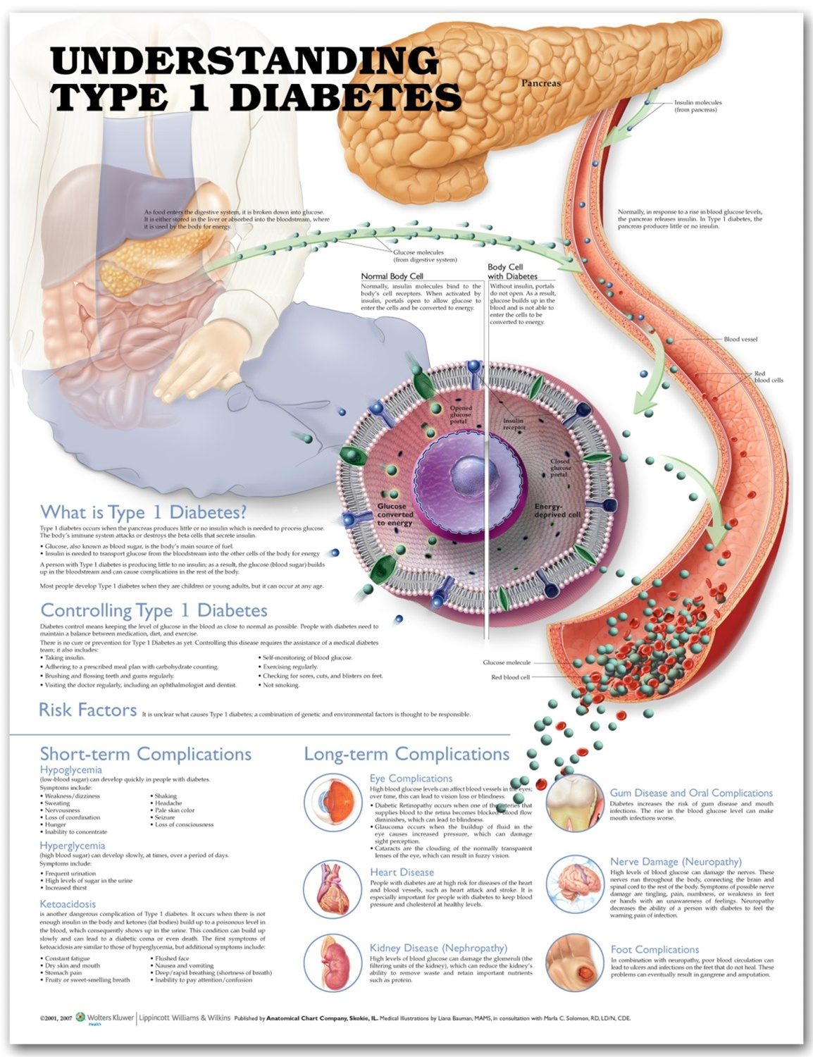 Anatomy of diabetes mellitus