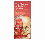 Muscular and Skeletal System Pocket Study Guide - 2nd Edition