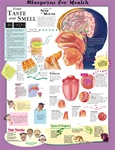 Blueprint for Health Your Taste and Smell Anatomical Chart