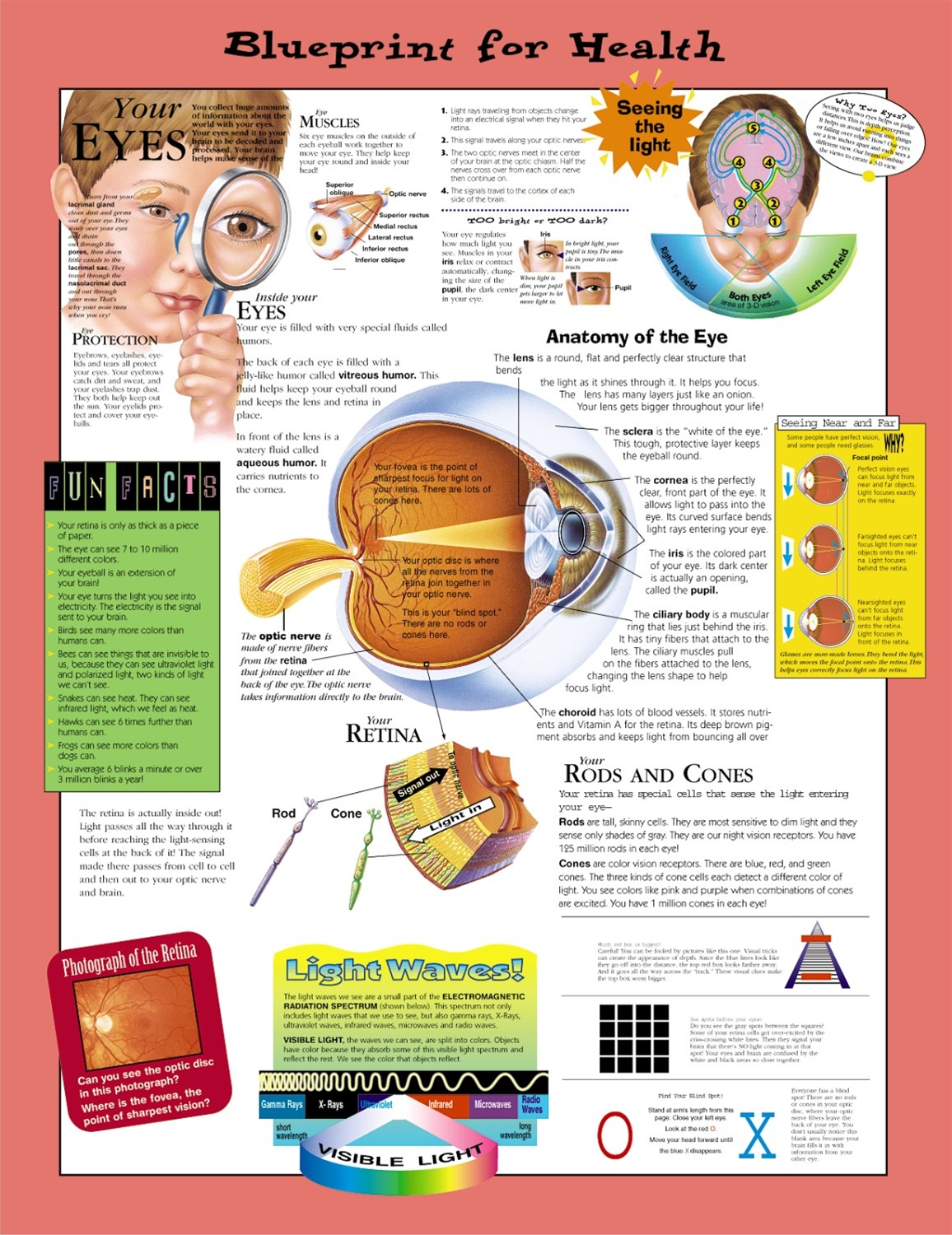 Blueprint for health your eyes anatomical chart paper anatomy retail price 2199 malvernweather Images