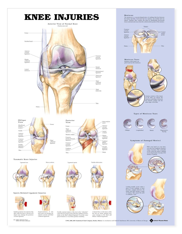 knee injuries anatomical chart