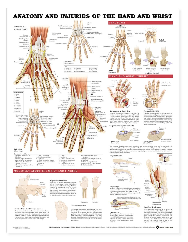 Anatomy and injuries of the hand and wrist anatomical chart anatomy