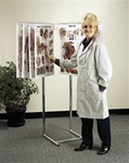 Space-Saver Floor Display Anatomical Chart Stand - Holds up to 18 Anatomical Charts