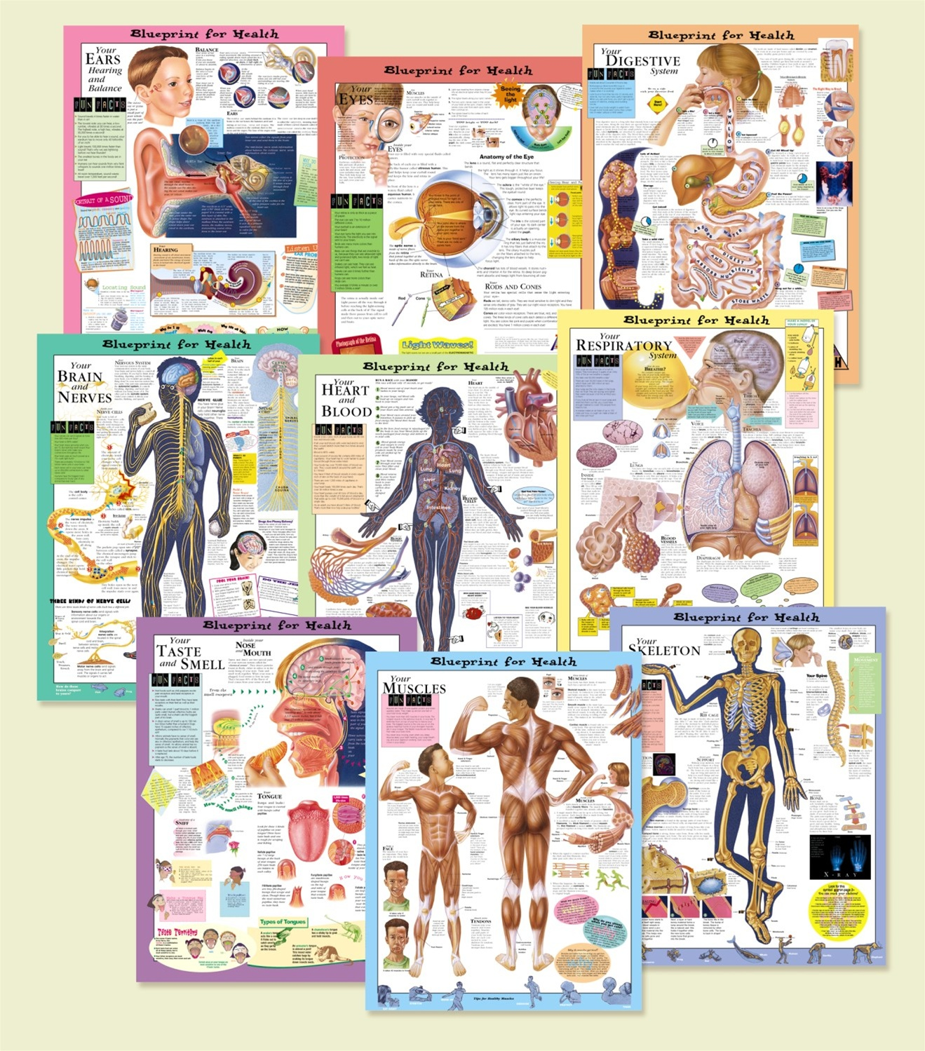 Blueprint for your health anatomical chart set all 9 laminated blueprint for your health anatomical chart set all 9 laminated malvernweather Images