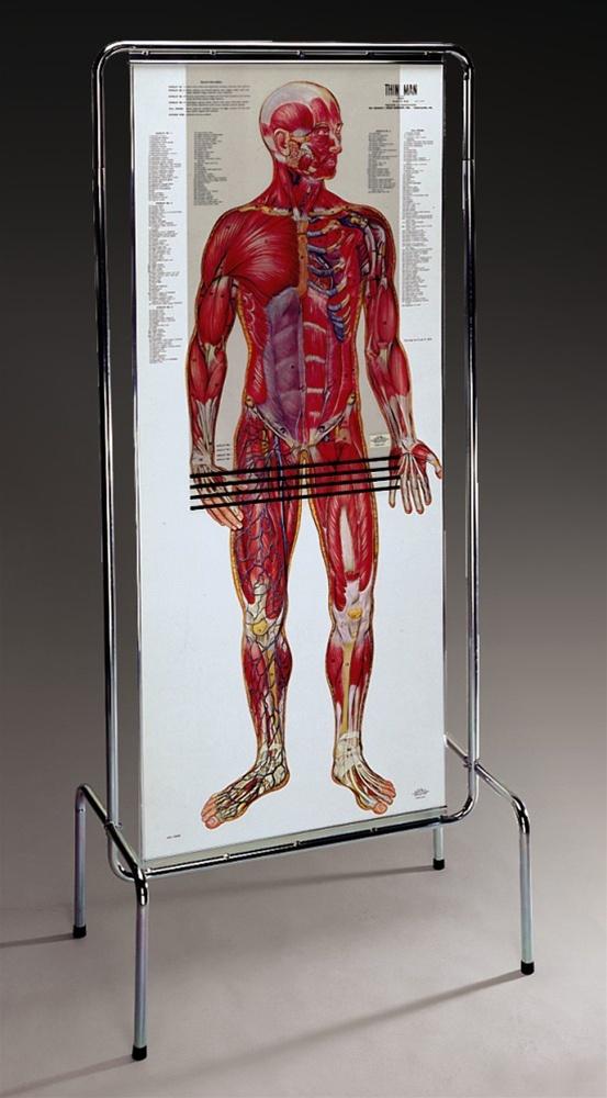 Thin Man Giant Anatomy Overlay Anatomical Chart Anatomy