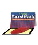 Mass Of Muscle Model (1 lb)