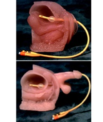 Female anatomy for catheterization