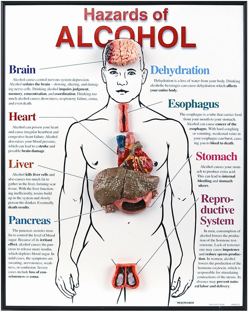 the dangerous effects of alcohol in the human body