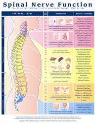 Spinal Nerve Function Anatomical Chart - Laminated