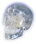 Classic- Skull, transparent, 3 part