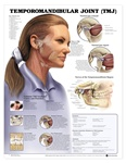Temporomandibular Joint (TMJ) Anatomical Chart - Laminated