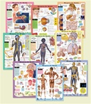 Blueprint For Your Health Anatomical Chart Set - All 9 Laminated